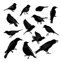 Andere Schadvögel